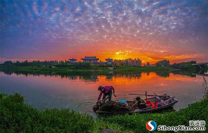 大泗洪古汴河太美了 张连华最新摄影作品