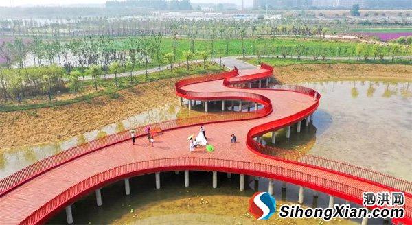 泗洪城区又多了一个新公园:尾水湿地生态公园